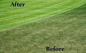 Aerate, Dethatch and Fertilization